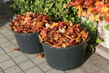 two buckets filled with autumn leaves